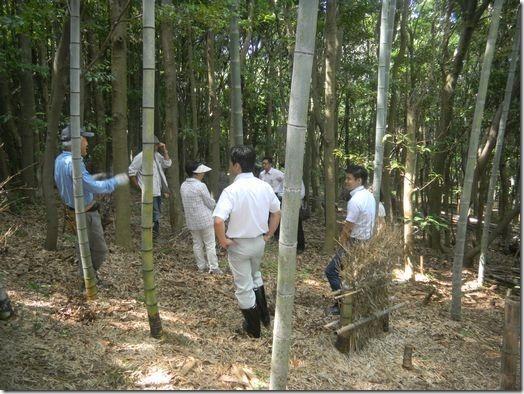 竹林DSCN1833